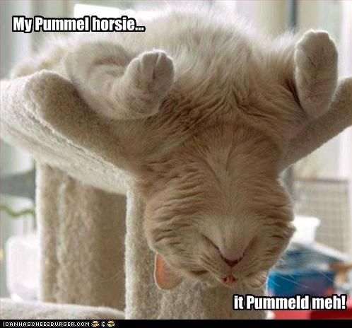funny-pictures-cat-gymnastics-the-pummel-horsie
